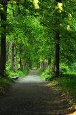 живописная дорога через зеленый лес — Стоковое фото