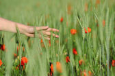 Young woman walking in green wheat field hand closeup — Stock Photo