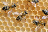 Close up view of the working bees — Foto de Stock