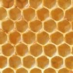 Honeycomb — Stock Photo #48828365