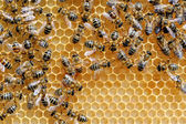 Working bees on honey cells — Stock Photo