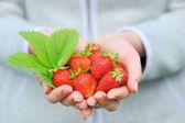 Hands holding fresh strawberries — Stock Photo