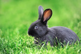 Rabbit in the grass — Stock Photo
