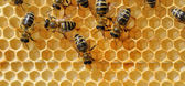 Close up view of the working bees — 图库照片
