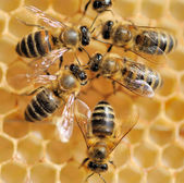 Close up view of the working bees — Stockfoto