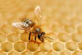Pracovní včely na med buňky — Stock fotografie