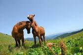 Dwa konie w góry — Zdjęcie stockowe