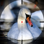 Beautiful swan — Stock Photo #8276891