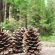 three pinecones — Stock Photo