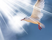 Bird in the sunlight — Stock Photo