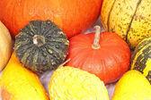 Variedade de abóboras e squash — Foto Stock