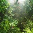 Stock Photo: Tropical rainforest