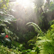 Tropical rainforest — Stock Photo #19872909