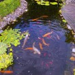 Stock Photo: Fish in pond