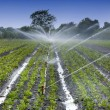 Stock Photo: Watering crops