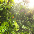 Tropical rainforest — Stock Photo #19873785