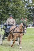 Binicilik at sporları — Stok fotoğraf