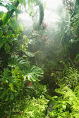 Tropical rainforest — Stock fotografie