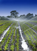 Watering crops — Stock Photo