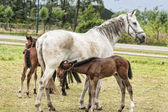 Horses in a meadow — Stock Photo