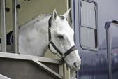 Horse in a trailer — Stock Photo