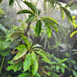 Rain in forest — Stock Photo #29877883