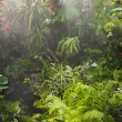 Tropical forest — Stock Photo #34956715