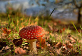 Autumn colors in a forest with toadstool — Stock Photo