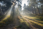 Fog in autumn forest — Stock Photo
