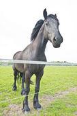 馬は牧草地で — ストック写真