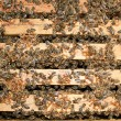 Working bees — Stock Photo #38556903