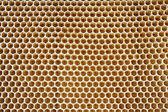 蜂蜜の細胞 — ストック写真
