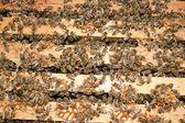 Working bees — Stockfoto