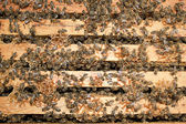 Travail abeilles — Photo