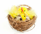 Easter chicken and hen bird's nest — Stock Photo