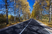 Autumn Birch Forest Road. A road through the forest during autumn — Zdjęcie stockowe
