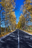 Autumn Birch Forest Road. A road through the forest during autumn — Стоковое фото