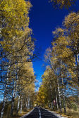 Autumn Birch Forest Road. A road through the forest during autumn — Stock Photo
