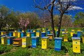 Blauwe en gele bijenkorven in tuin. — Stockfoto