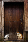 Cats sitting by a Barn door — Stock Photo