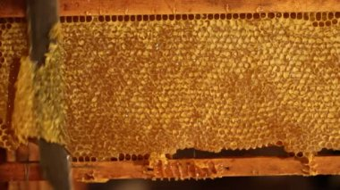 Beekeeper unsealing honeycomb — Stock video