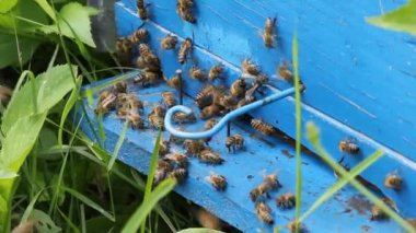 Honey bees infront of beehive — 图库视频影像