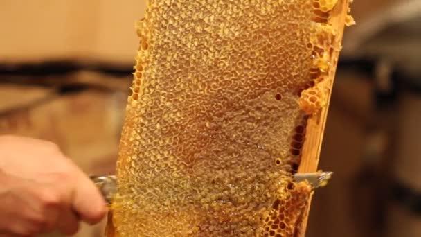 Nid d'abeille déscellement apiculteur — Vidéo