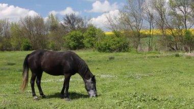 Horse — Stock Video