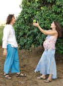 Young happy pregnant woman & her husband — Stockfoto