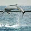Stock Photo: Jumping dolphin