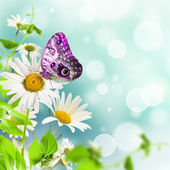 Daisywheels and butterfly — Stock Photo