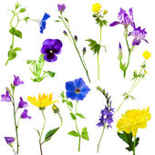Collection flowers — Stock Photo