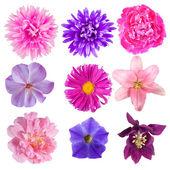 Flores — Foto Stock