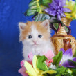 Cat and flowers — Stock Photo #34387691